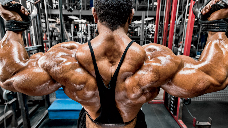 musculação para iniciantes